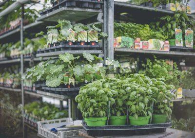 giardinaggio-e-agricoltura