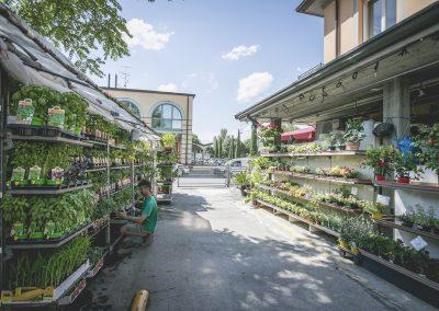 piante-orto-santarcangelo-romagna